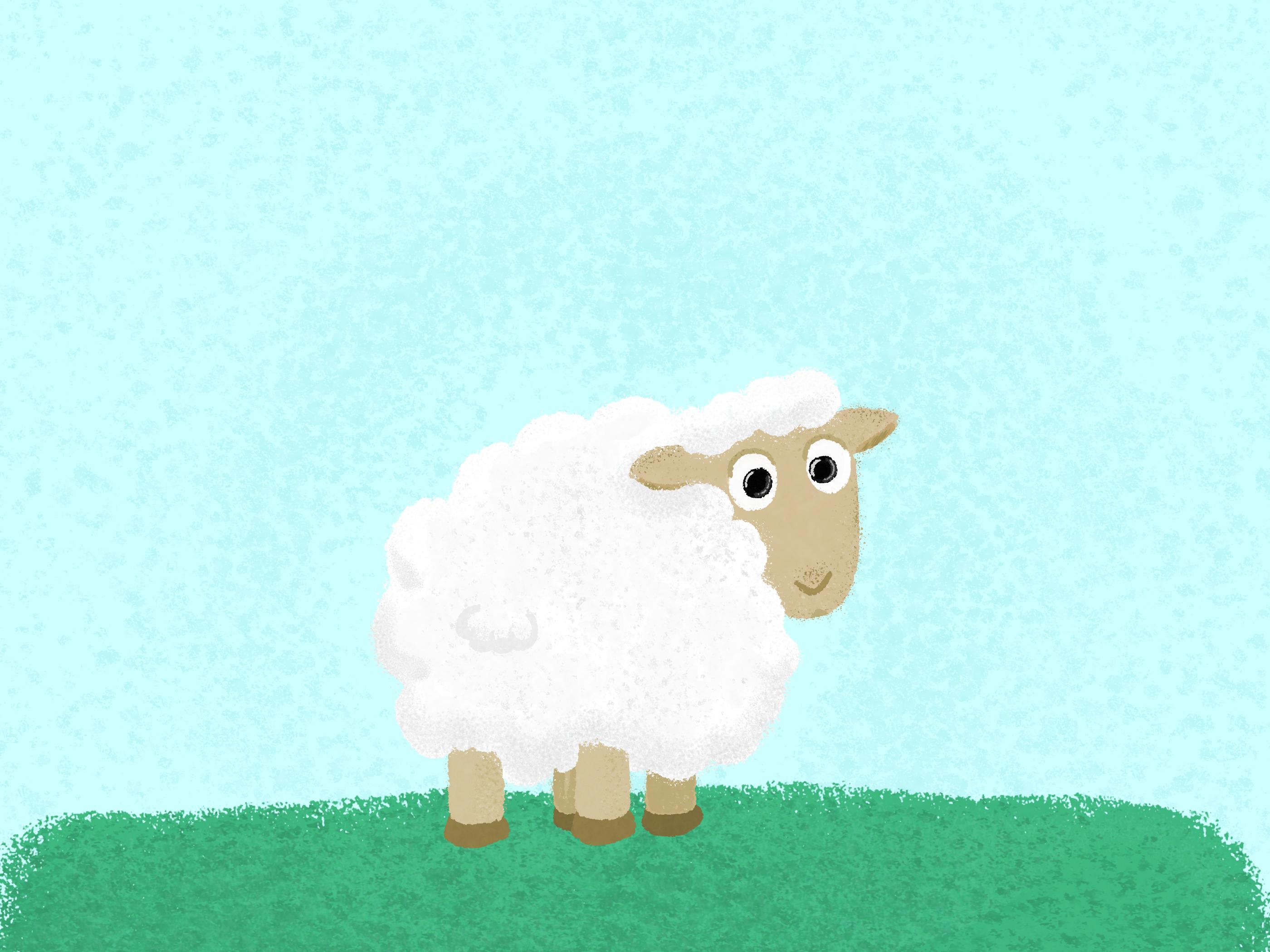 A Cute Sheep